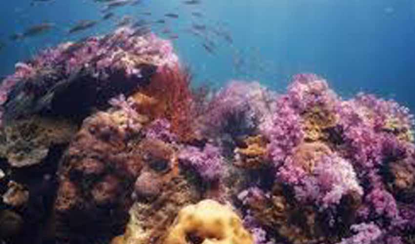 ทัวร์ หลีเป๊ะ low season เกาะตาลัง เป็นเกาะที่ใช้ดำน้ำ ดูปะการัง